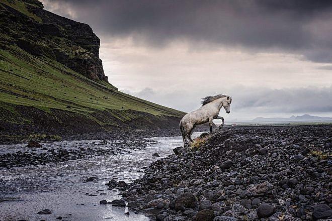 Icelandic Horse Prints