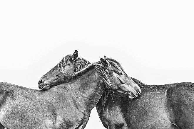 Black & White Equine Prints