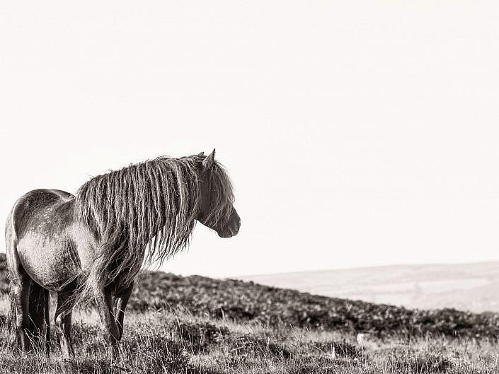 Dartmoor Collection