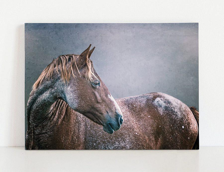 Fine Art Equine Print   Horse Photography