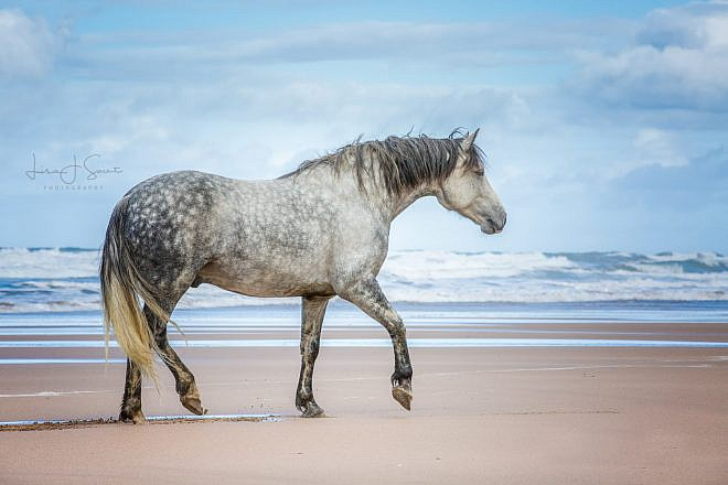 Fine Art Equine Print | Horse Photography