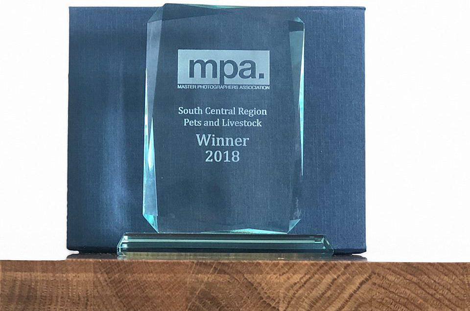 South Central Regional award for Pet Photographer 2018 (MPA)