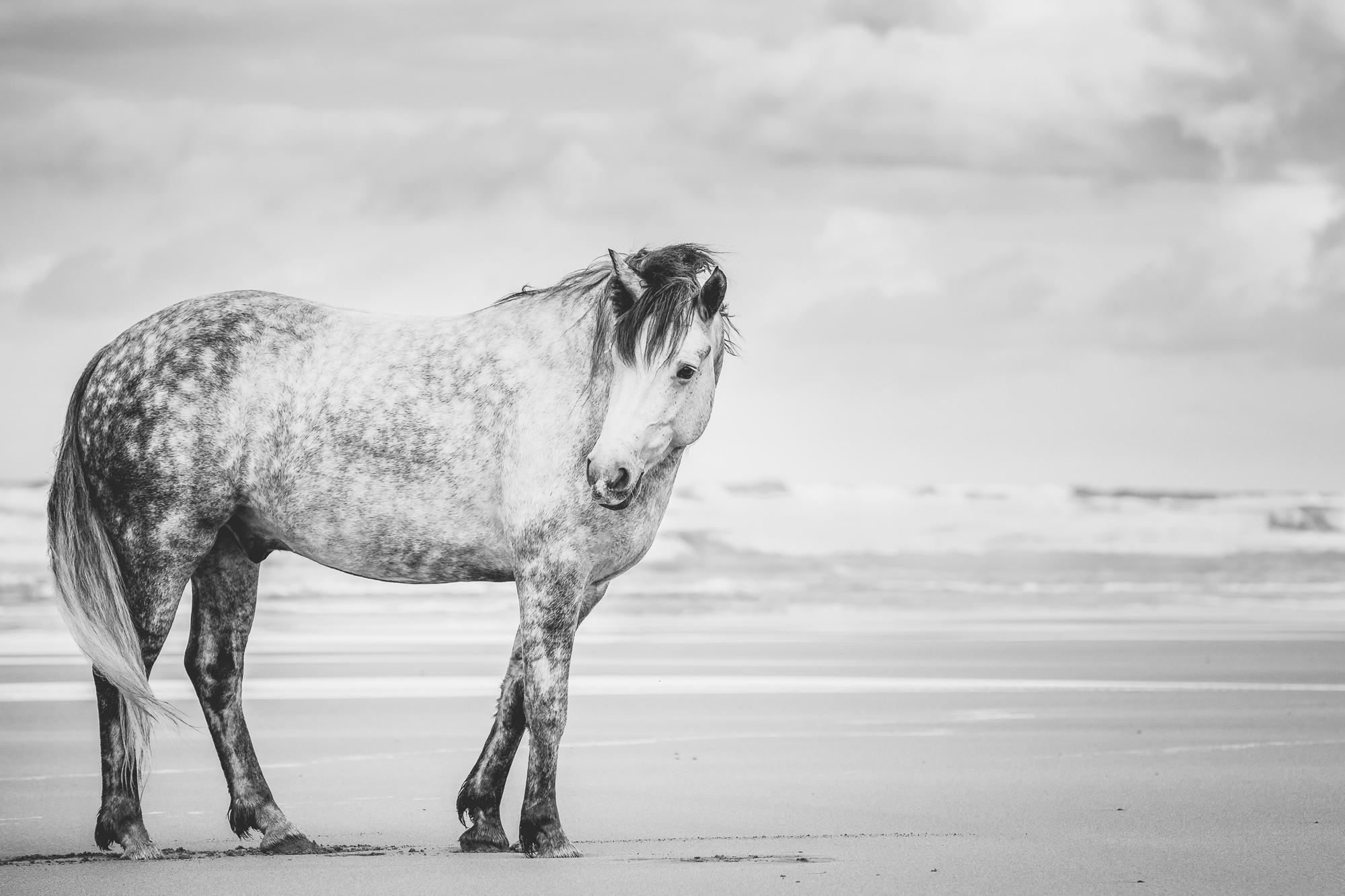 Beach days black white equine fine art print