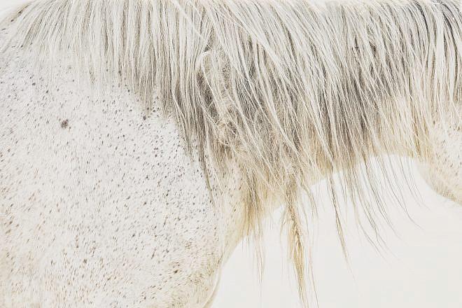 Fine Art Equine Print | Horse Photography