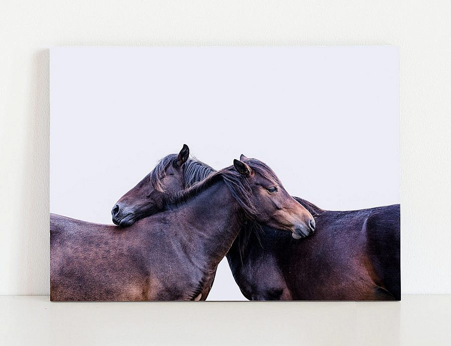Two Horses Fine Art Equine Print | Horse Photography