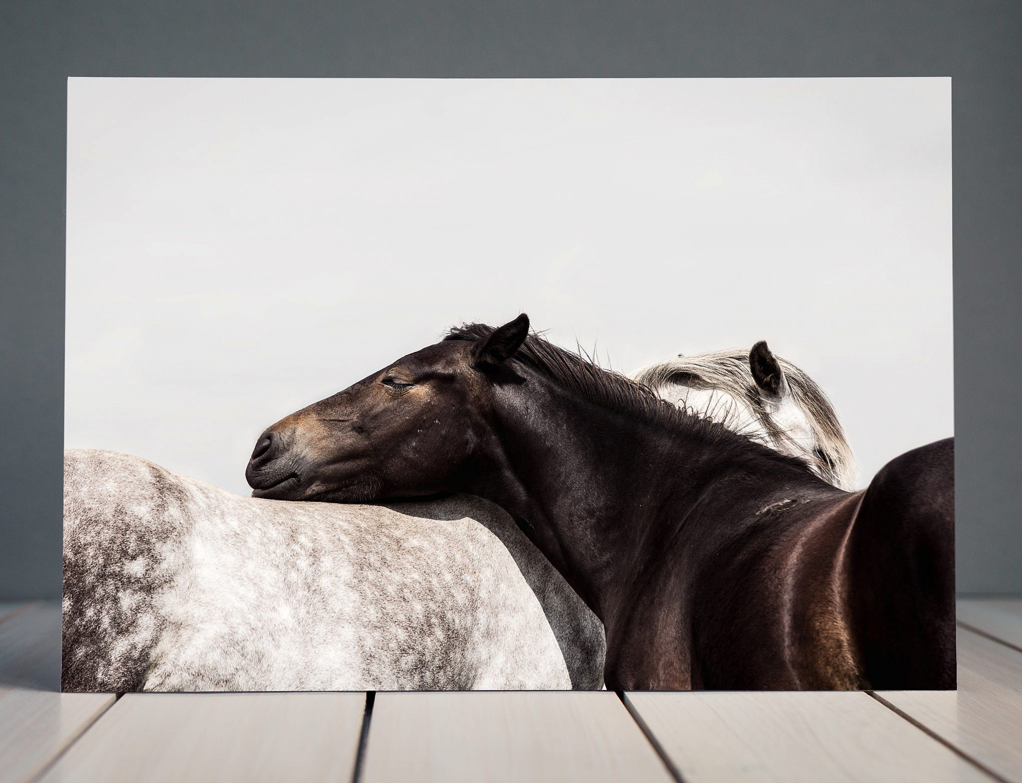 Two horse embrace Fine Art Equine Print | Horse Photography