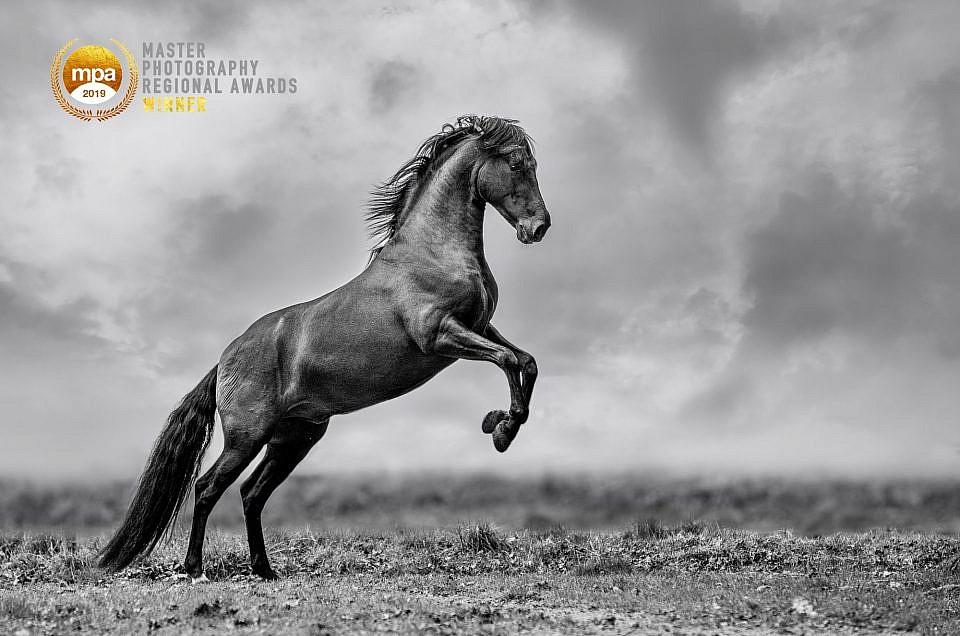 Wildlife & Nature regional Master Photographer of the year